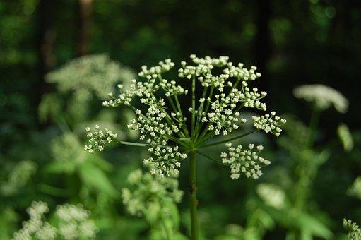Nature, Plant, Flower, Sheet, Season, Outdoors, Summer