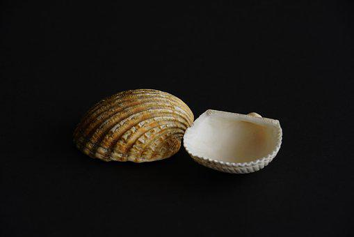 Two Shells, Seashell, Shell, Vacations, Memory