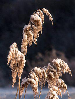 Nature, Winter, Wintry, Snow, Winter Cold, Cold, Frost