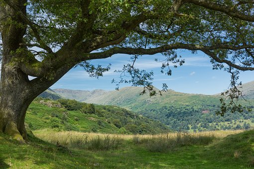 Wales, Lake District, Tree, Nature, Landscape, Outdoors