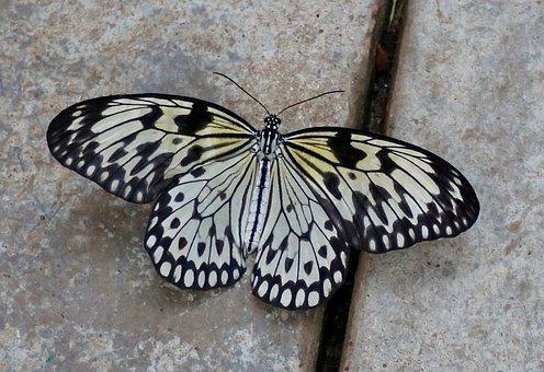 Butterfly, Insect, Wing, Nature, Animal World, Biology