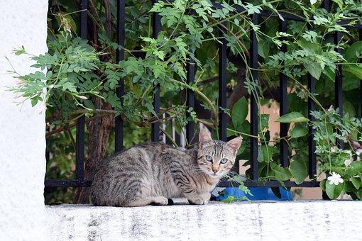 Garden, Nature, Flora, Cat, Greece, Athens