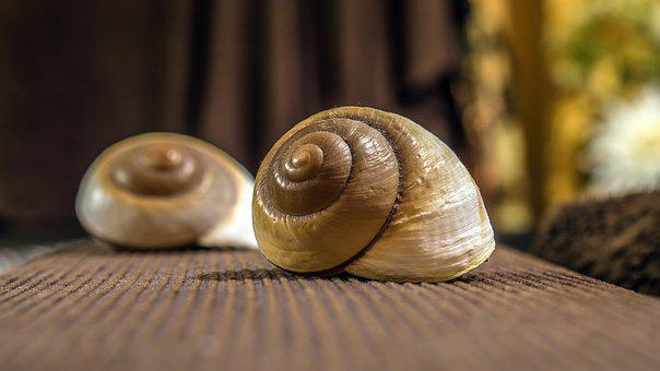 Snail, Exoskeleton, Seafood, Zen, Spiral, Nature, Close