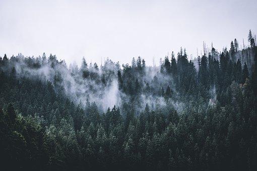 Forest, Fog, Clouds, Nature, Landscape, Czech Republic