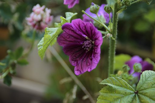 Flower, Flora, Nature, Garden, Leaf, Blooming, Floral
