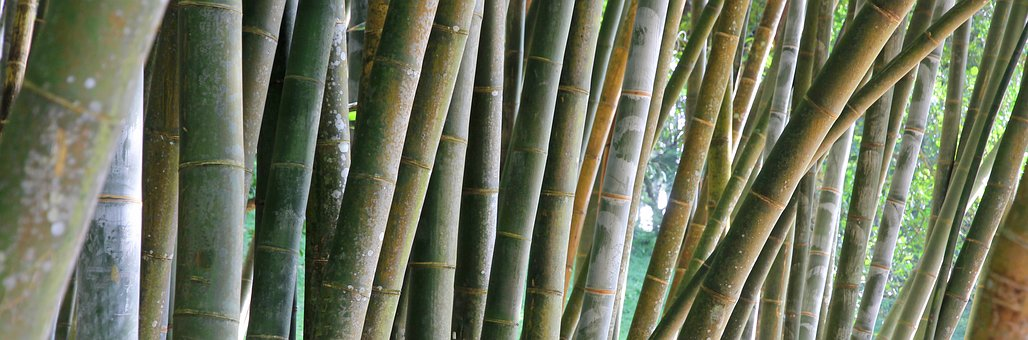 Bamboo, Hatch, Stripes, Plant, The Regularity Of The