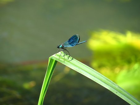 Nature, Insect, Leaf, Summer, Dragonfly