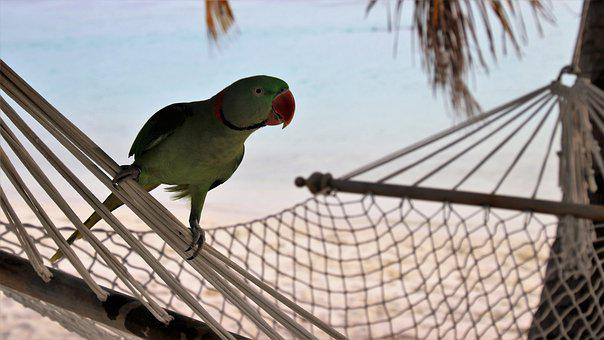 Beach, In The Evening, Bird, Parrot, Tropical, Maldives