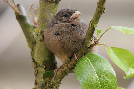 Baby Bird, Animal World, Nature, Bird, Tree, Animal