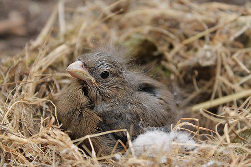 Bird, Nature, Animal World, Nest, Animal, Small, Sweet