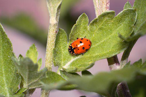 Insect, No One, Nature, Sheet, Outdoors, Ladybug
