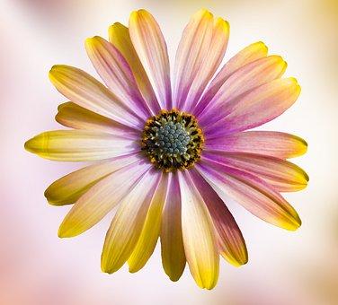 Flower, Nature, Petal, Plant, Summer, Floral, Flowering