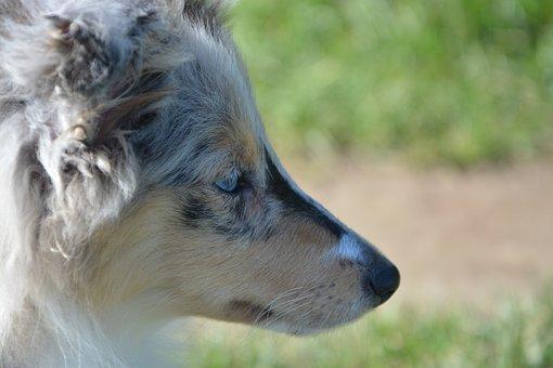 Puppy, Dog, Head Profile, Muzzle End