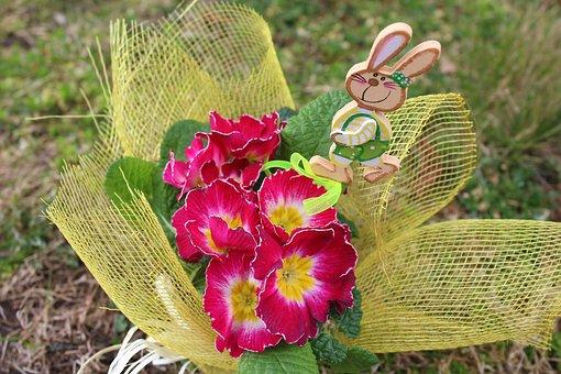 Primula, Prymulka, Spring Flowers, Spring, Nature