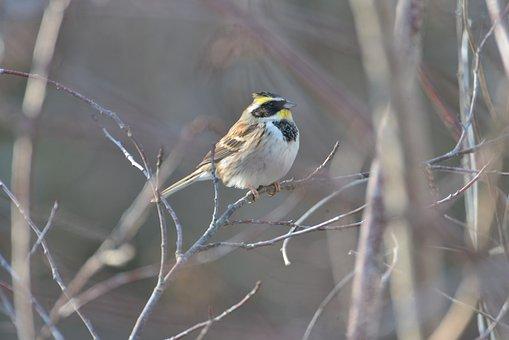 Natural, Bird, Wild Animals, Outdoors, Animal