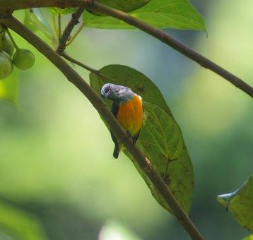 Bird, Wildlife, Animal, Nature, Rainforest, Wild