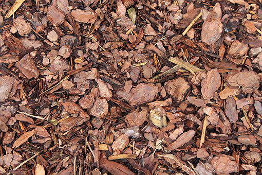 Substrate, The Bark, Wood, Dry, Texture, The Background