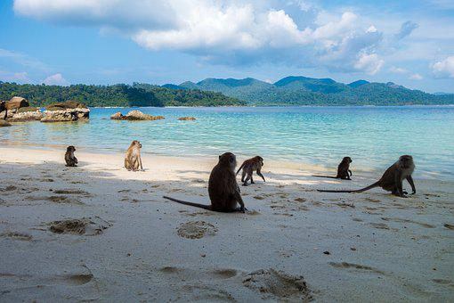 Holidays, Enjoy, Chill Out, Ape, Beach, Primates