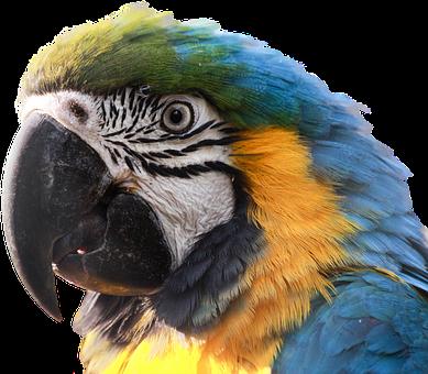 Ara, Parrot, Bird, Blue Macaw, Clipping, Graphics