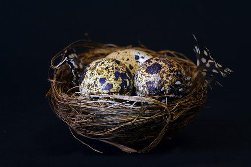 Nest, Bird's Nest, Speckled, Feather, Easter