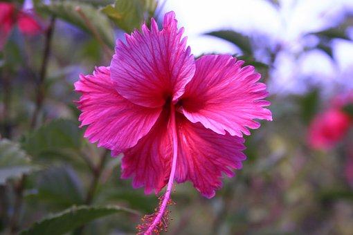 Nature, Flower, Plant, Leaf, Garden, Flowering, Nice