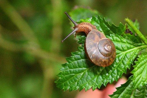 Nature, Garden, No Crest Of The Vertebral Animals
