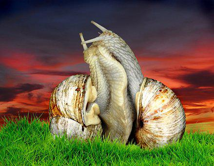 Nature, Animal, Slowly, Grass, Snail, Romance