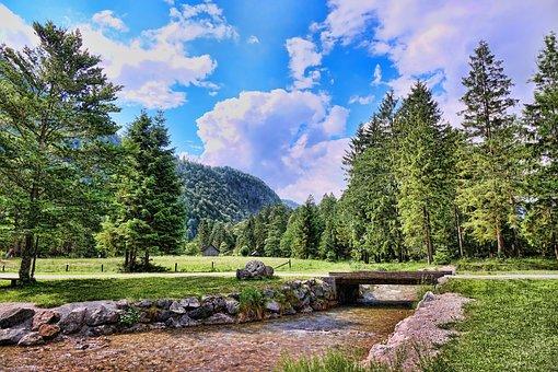 Tree, Nature, Landscape, Almtal, Summer