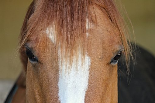 Horse, Head, Mane, Hair, Fur, Eyes, View, Horses Eye