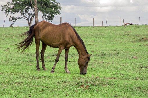 Animal, Horse, Field, Lawn, Grass, Landscape, Nature