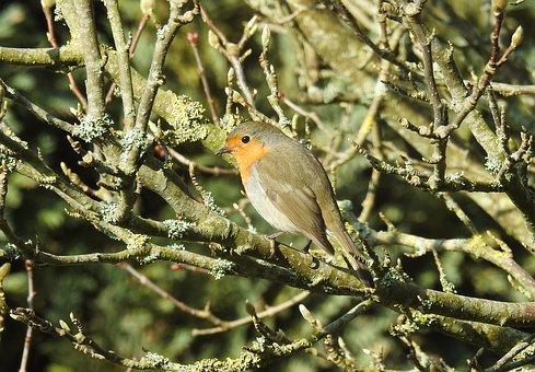Nature, Bird, Tree, Animal World, Animal, Robin