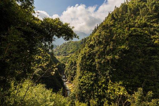 Tree, Nature, Landscape, Wood, Leaf, Mountain, Sky
