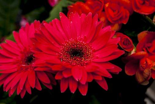 Flower Foreground, Nature, Plant, Garden