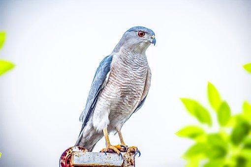 Nature, Wildlife, Bird, Wild, Eagle, Capture, Click