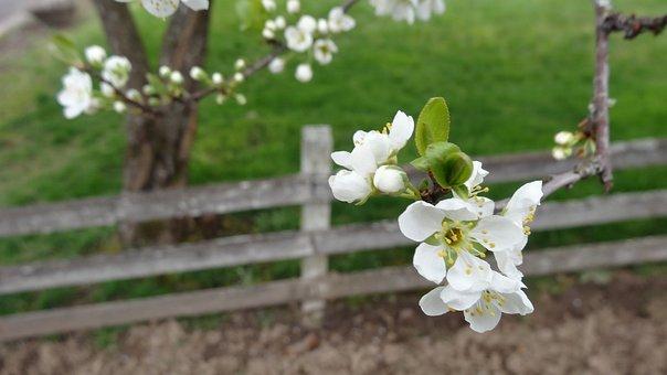 Flower, Tree, Nature, Flora, Outdoors, Season, Branch
