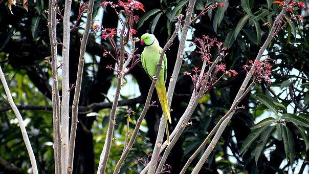 Bird, Nature, Tree, Tropical, Leaf, Flora, Outdoors