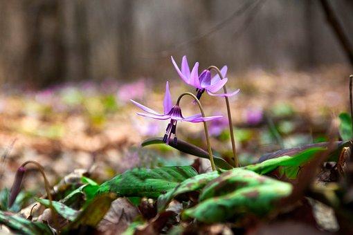 Nature, Leaf, Plants, Outdoors, Season, Wildflower