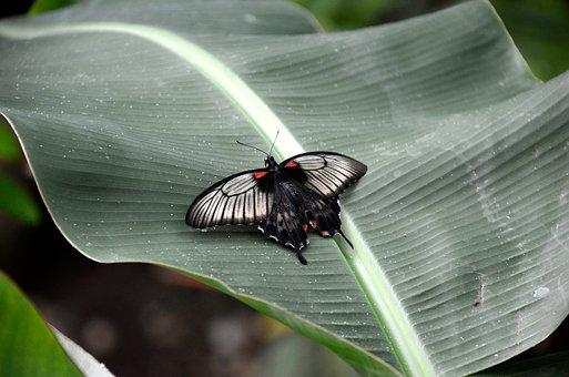 Nature, Insect, Garden, Plant