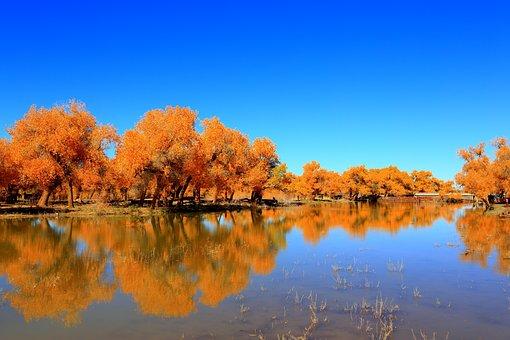 Nature, Reflection, Autumn, Tree, Lake, Ejin