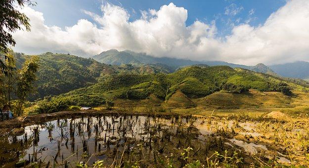 Sapa, Vietnam, Rice Fields, Rice, Rice Terraces