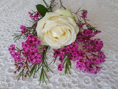 Rose White, Waxflower Pink, Noble, Tender, Floral