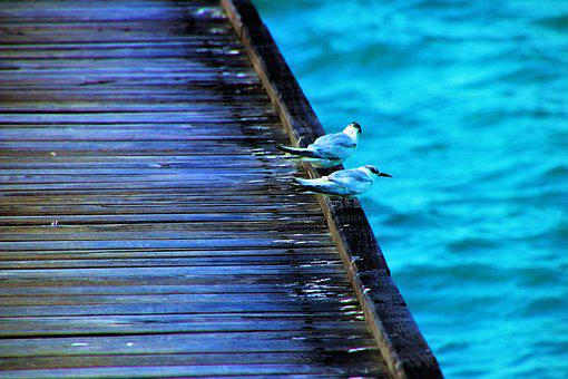 Birds, Water, The Pier, Blue, Neon Colors, Scenery