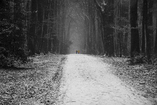 Forest, Tree, Black And White Photography, Winter