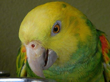 Parrot, Bird, Wildlife, Animal, Tropical