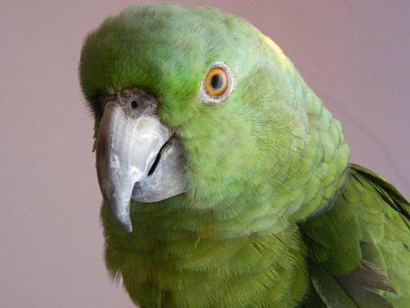 Parrot, Bird, Animal, Nature, Wildlife