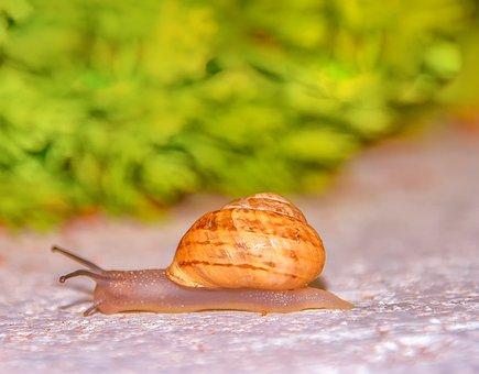 Snail, Slowly, Bauchfuesser, Away, Slimy, Shell, Crawl