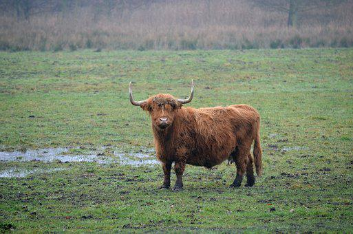 Cattle, Agriculture, Mammal, Cow, Animals, Animal