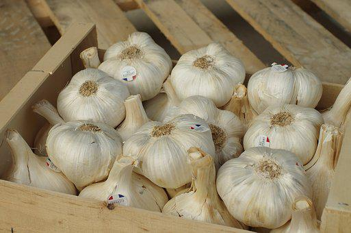 Garlic, Garlic Elephant, Bulb, Garlic Grown, Vegetable