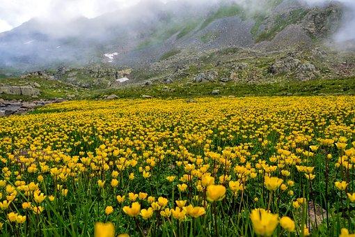 Nature, Area, Chan, Flower, Grass, Landscape, Kaçkars