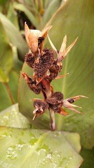 Nature, Leaf, Flora, Unusual, Spike, Natural, Botany